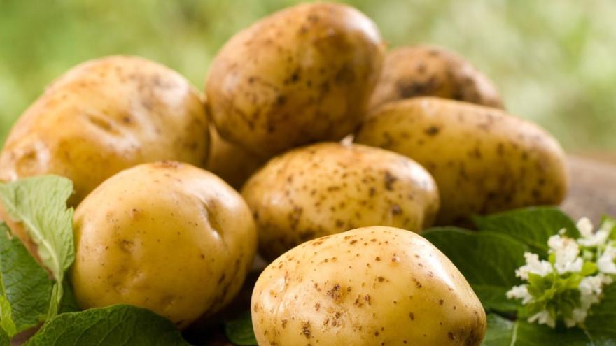 Полезные свойства картофеля: как сытно поесть и похудеть