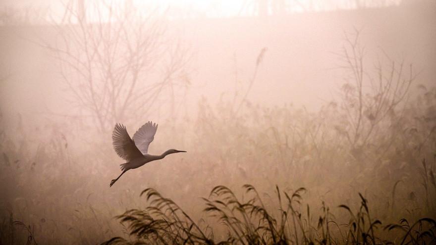 Погода в Салехарде: пасмурный день обещают синоптики