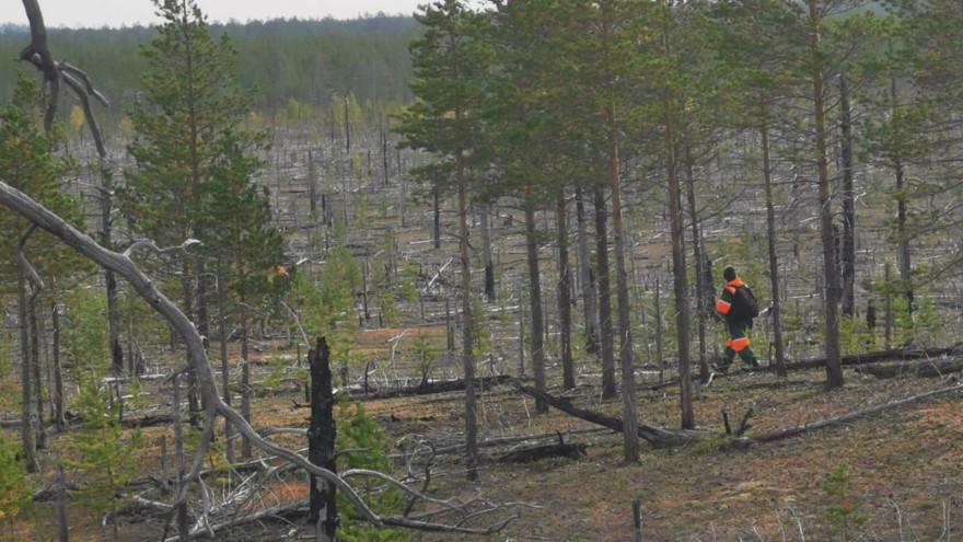 На Ямале два дня искали потерявшегося в лесу мужчину
