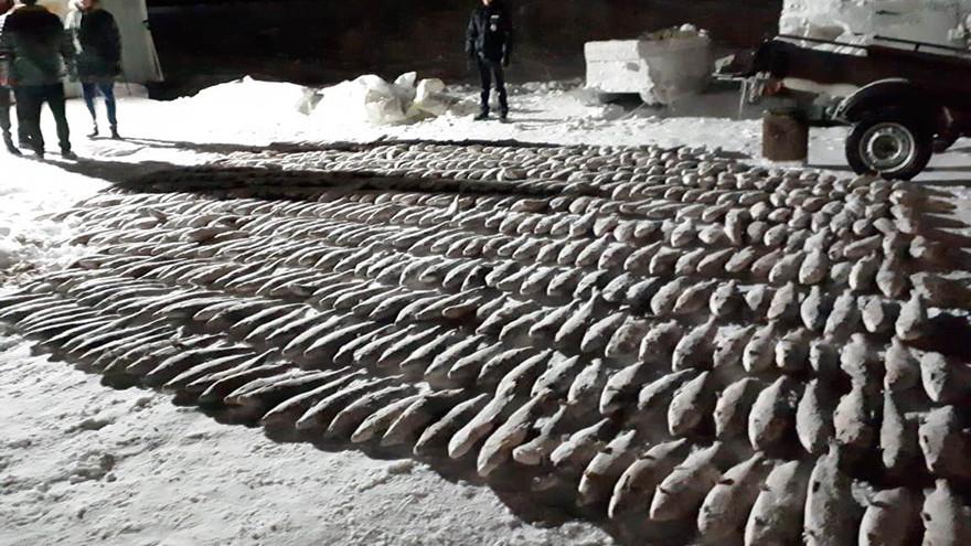 Сотни метров браконьерских сетей обнаружены в Тазовском районе