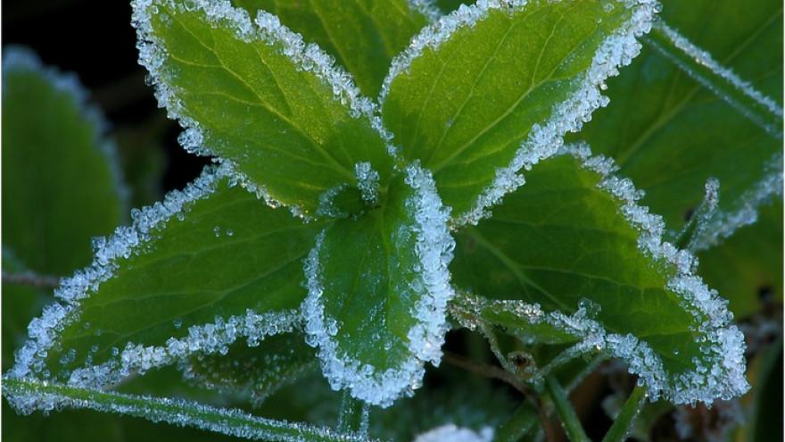 Погода в Салехарде 3 июня: осадки, порывистый ветер и заморозки по ночам
