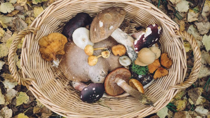 Почему нужно есть грибы каждый день