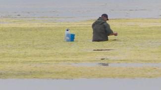 Тунайчу захватили водоросли: природный памятник Сахалина погибает