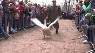 Птичьи бега, гонки на Олонке и ярмарка. Репортаж с гусиного фестиваля в Карелии