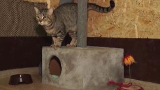 Главный ветеринар Ямала - о том, как в округе заботятся о бездомных животных