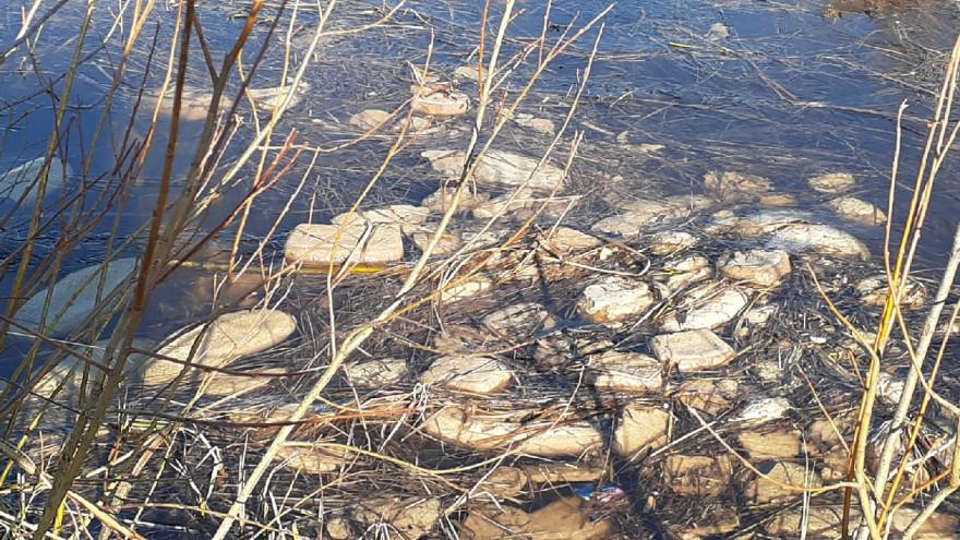 В Ноябрьске после Дня Победы в озере нашли десятки утопленных буханок хлеба
