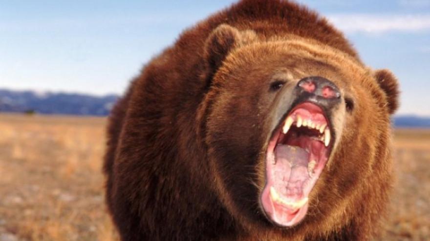 В Тазовском районе лютуют дикие, голодные медведи