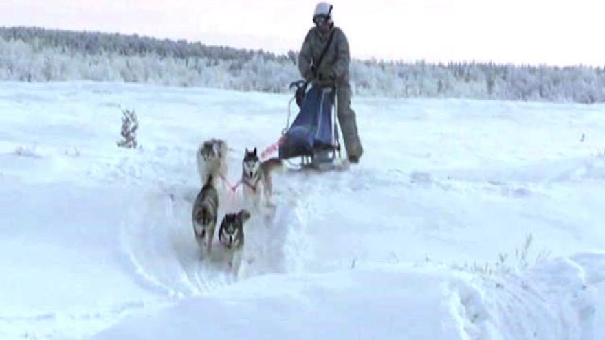 Ездовым псам вновь нашли применение. В арктической мотострелковой бригаде СФ начались занятия по управлению собачьей упряжкой