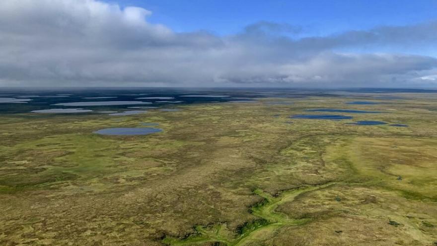 «Газпром нефть» и Shell займутся разработкой масштабного кластера на Гыданском полуострове