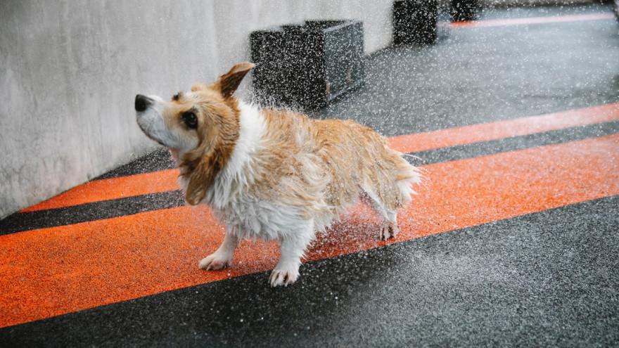 Погода в Салехарде: синоптики обещают грибной дождь