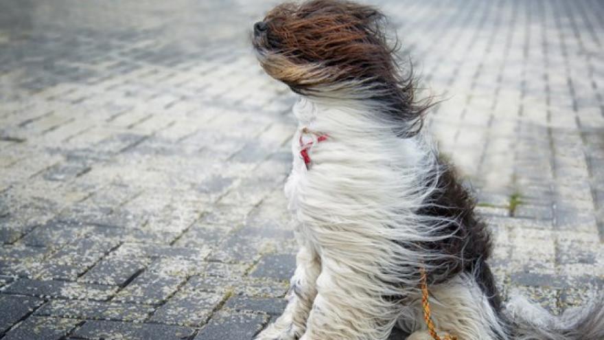 МЧС предупреждает: мощный шторм ожидается на Ямале
