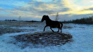 Захватывающие панорамы Полярно-Уральского природного парка