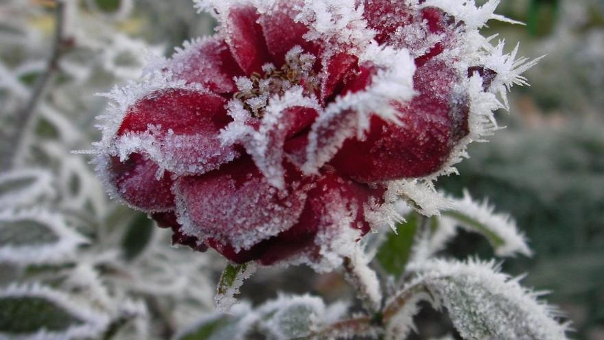 Погода в Салехарде: холодный ветер и ночные заморозки