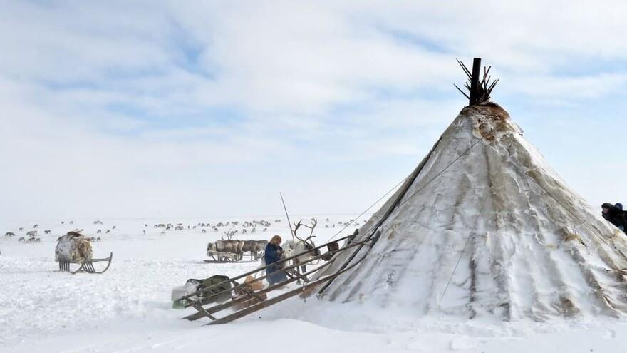 Кочевники Ямала могут подтвердить статус ведущих традиционный образ жизни через Госуслуги