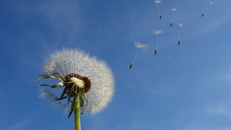 Приметы на 16 июня: запреты и традиции в день Лукьяна Ветряка