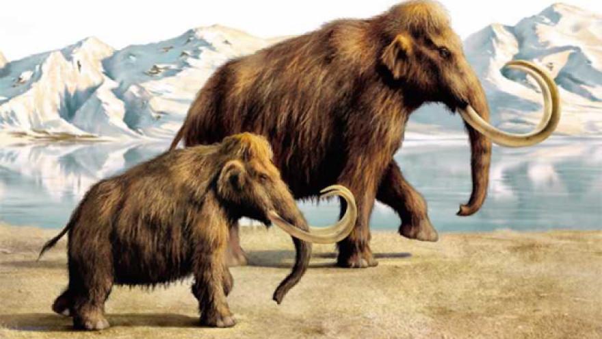 Ученые доказали, что кровь мамонта не замерзает