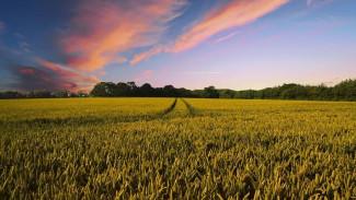 Заслуженный агроном России - о том, как жаркая весна может сказаться на летнем урожае