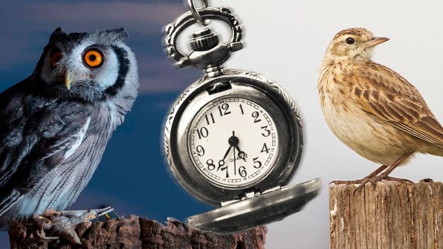 Не только «жаворонки» и «совы»: ученые выявили еще четыре типа людей