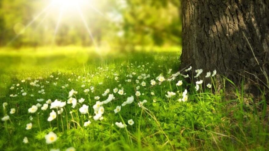 Погода в Салехарде: лето возвращается