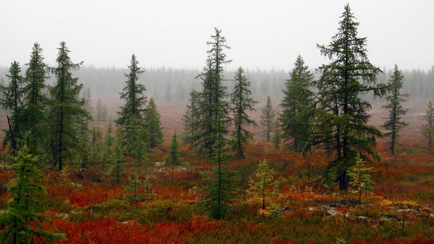 В Надымском районе могут появиться особо охраняемые природные территории
