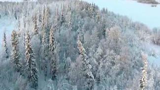 Высокие кедры, пушистые сосны и белоствольные березы: «Арктический патруль» в Шурышкарском районе