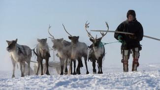 Эксперт: оленеводы наиболее подвержены влиянию изменения климата и промышленного освоения Арктики