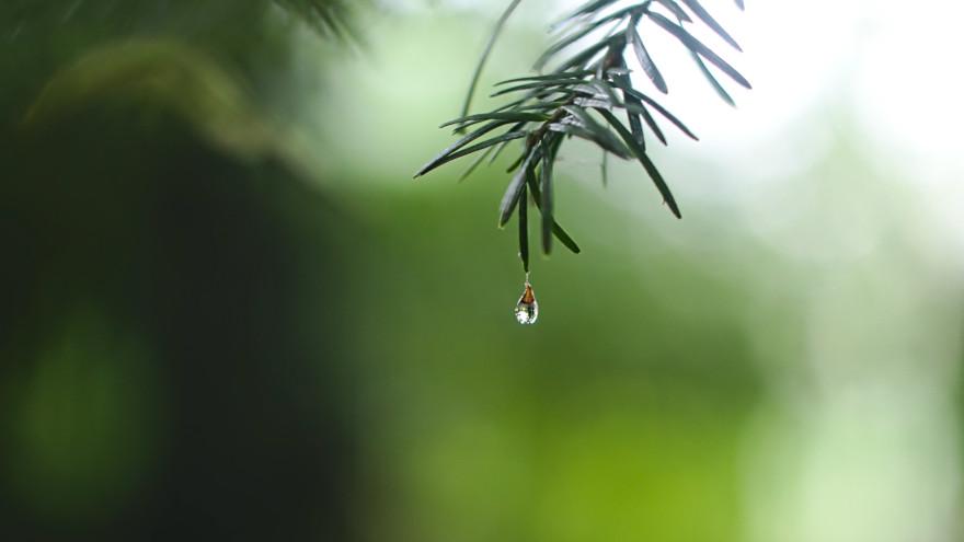 Погода на Ямале: плюсы днём и ночью, но с дождём