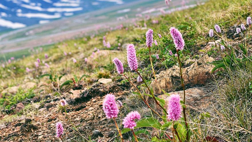 На Ямале добровольцы обустроят экотропы на Полярном Урале