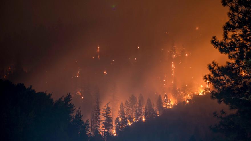 87 человек борются с огнем в лесах Ямала