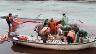Река раздора: чем рыбаки Тазовского и Красноселькупского районов помешали друг другу