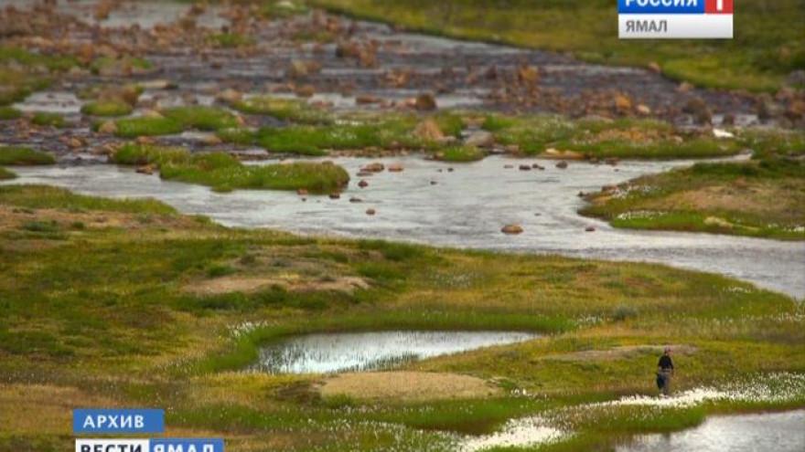 Разлив метанола на Ямале. Виновник заплатит за погубленную флору