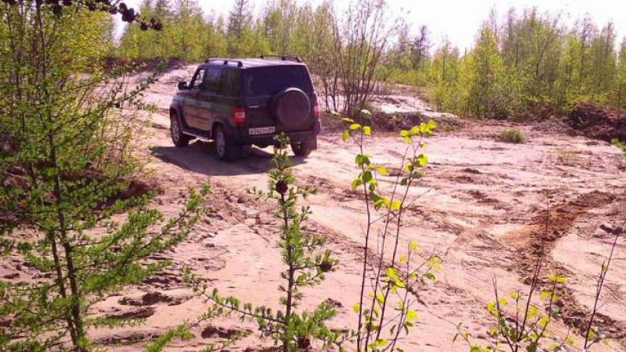 Нарушителей в лесах Ямала будут отслеживать видеокамеры