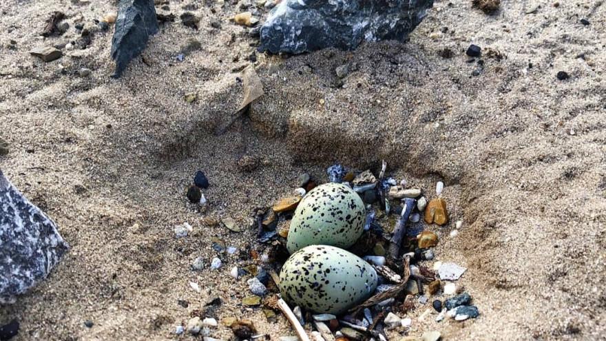 «Смотрим под ноги!». На месторождении в ЯНАО птица свила гнездо прямо на камнях ФОТО