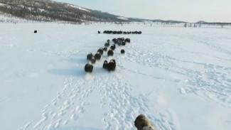 В самом красивом заказнике Ямала установили фотоловушки для слежки за овцебыками