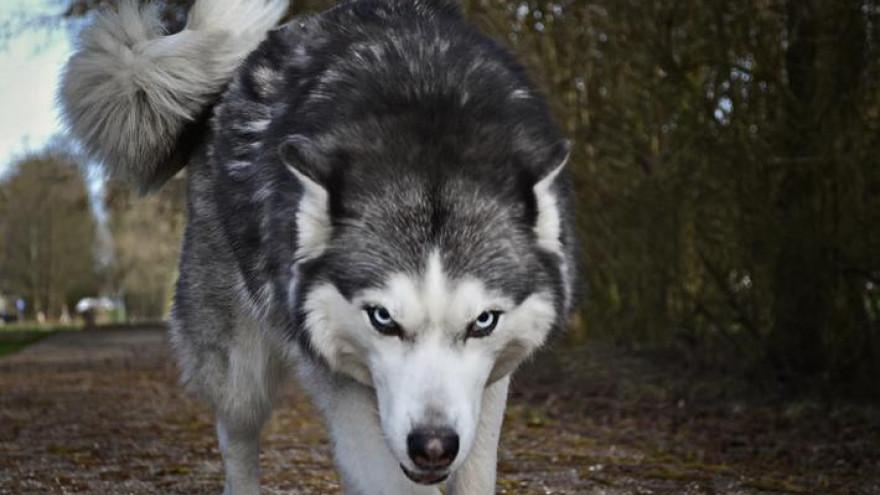 Народные приметы о животных: по ним каждый сможет распознать знаки, указывающие на успех