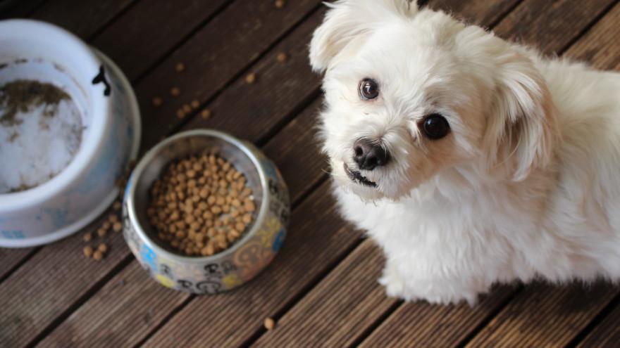 Никакой ценности: ямальские зоозащитники назвали «бесполезные» марки собачьего корма