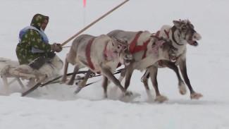 Захватывающие гонки, национальная борьба и ярмарка: в Югре отметили День оленевода