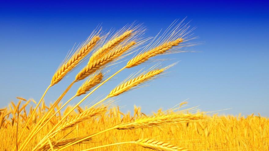 Приметы на 10 июня: как приумножить урожай и не лишиться мужской силы