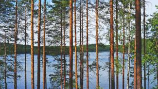 Карельские учёные в авангарде мировой науки: как восстанавливается лес после вырубки