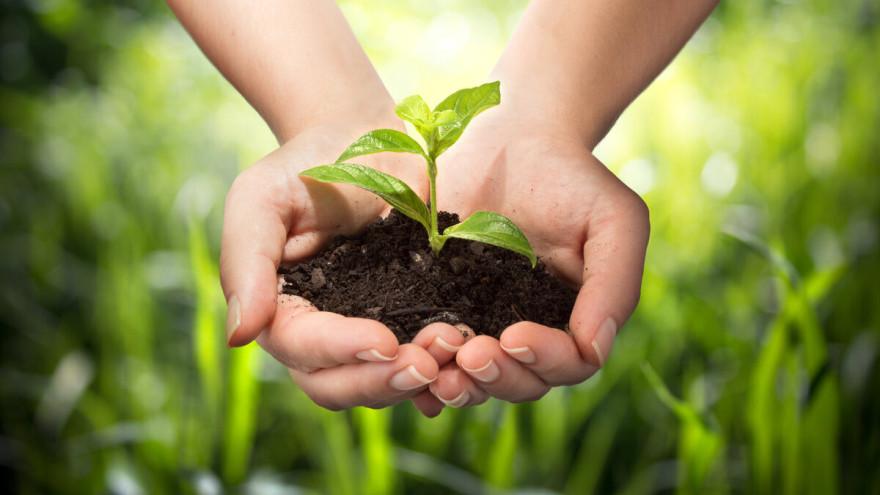Приметы на 17 июня: как повысить плодородие и вернуть любовь