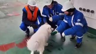 На Ямале экипаж ледокола спас потерявшуюся собаку от гибели во льдах Арктики ВИДЕО
