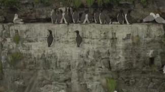 Ученые-орнитологи Чукотки завершили исследования популяции кулика-лопатня