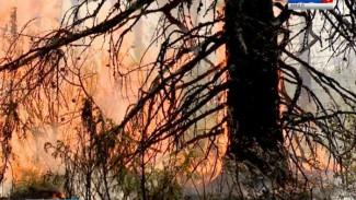 Сотрудники «Ямалспас» всю ночь тушили лес рядом с Катравожем