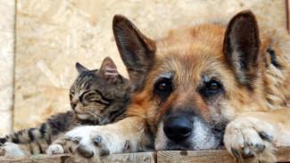 #9 Не гони Пургу: о ситуации с бездомными животными глазами зоозащитников