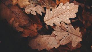 Погода в Салехарде: пасмурно, дождливо, но все еще плюс