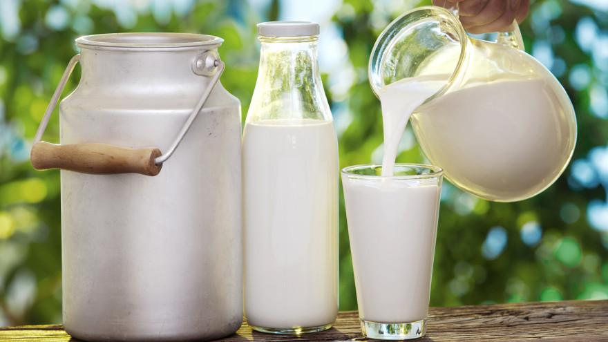 Почему полезно молоко: что будет, если пить его каждый день