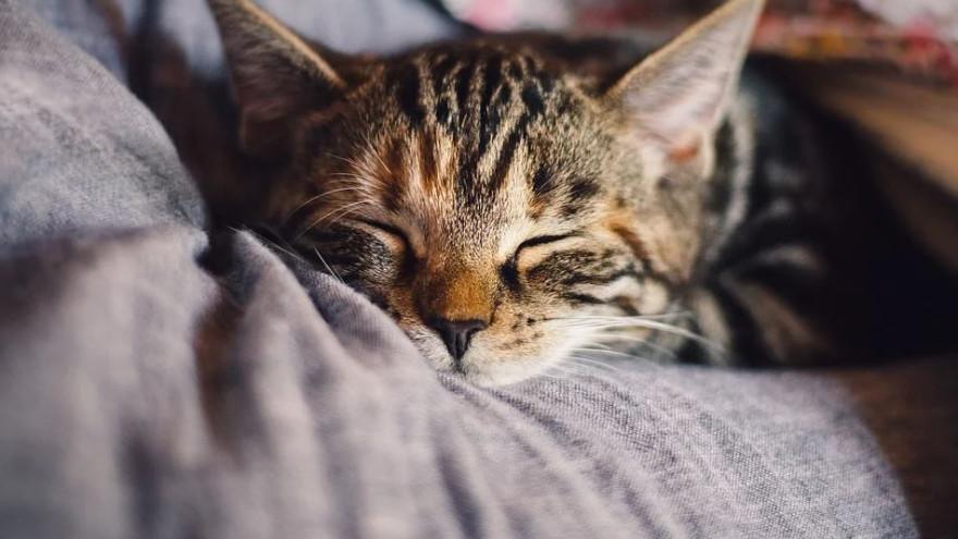 Секреты здорового сна: как научиться рано вставать и высыпаться