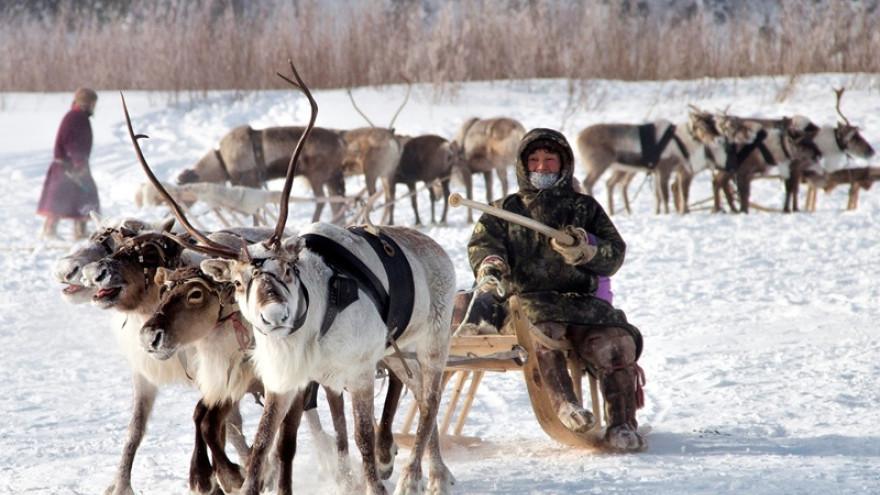 Нефтяники помогут национальным хозяйствам Пуровского района
