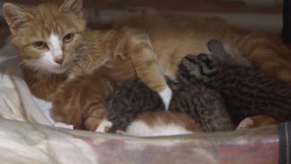 В Приморье обыкновенная кошка спасла от гибели детенышей леопарда