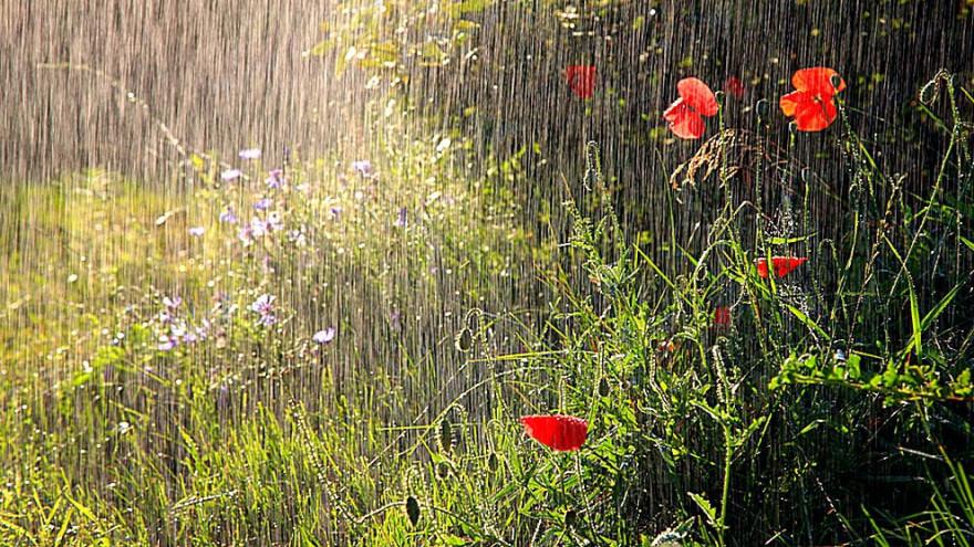 Народные приметы на 7 июня: почему в старину боялись дождя и росы в этот день
